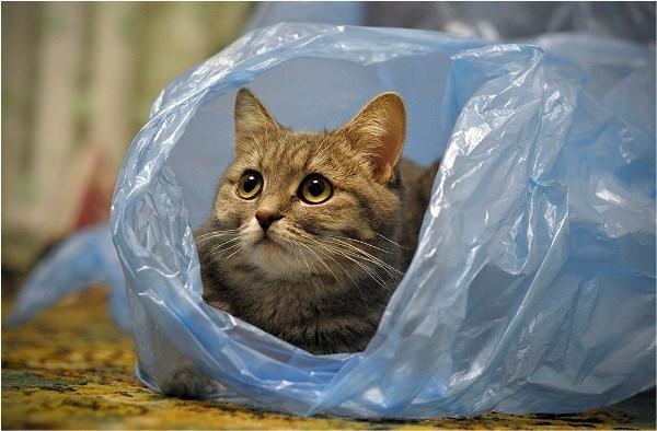 Кот в целлофановом пакете