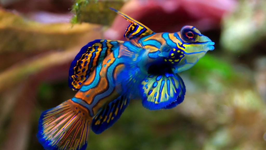 Разноцветная рыба