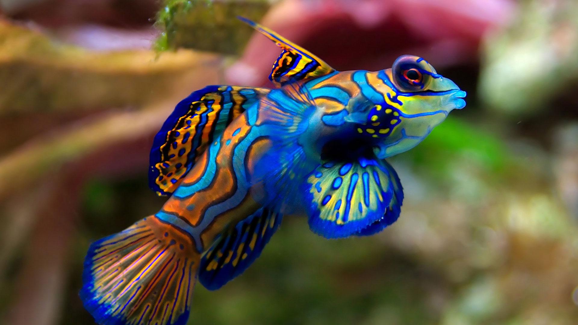 Фото живые рыбы во влагалище порно