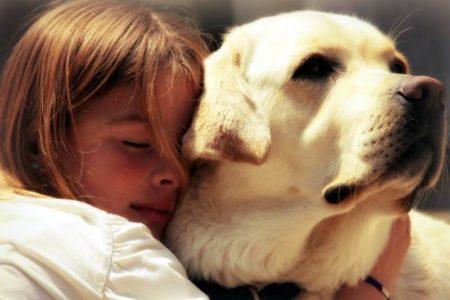 Ребёнка укусила собака: чего следует опасаться