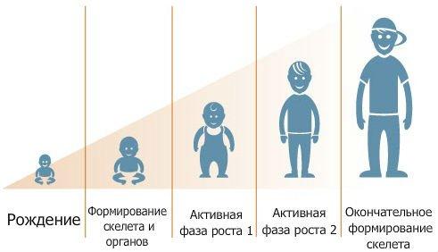 рост будущего ребенка