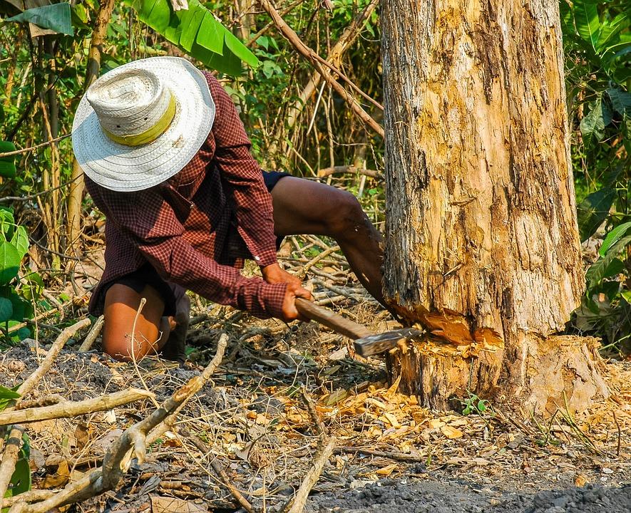 Рубить дерево