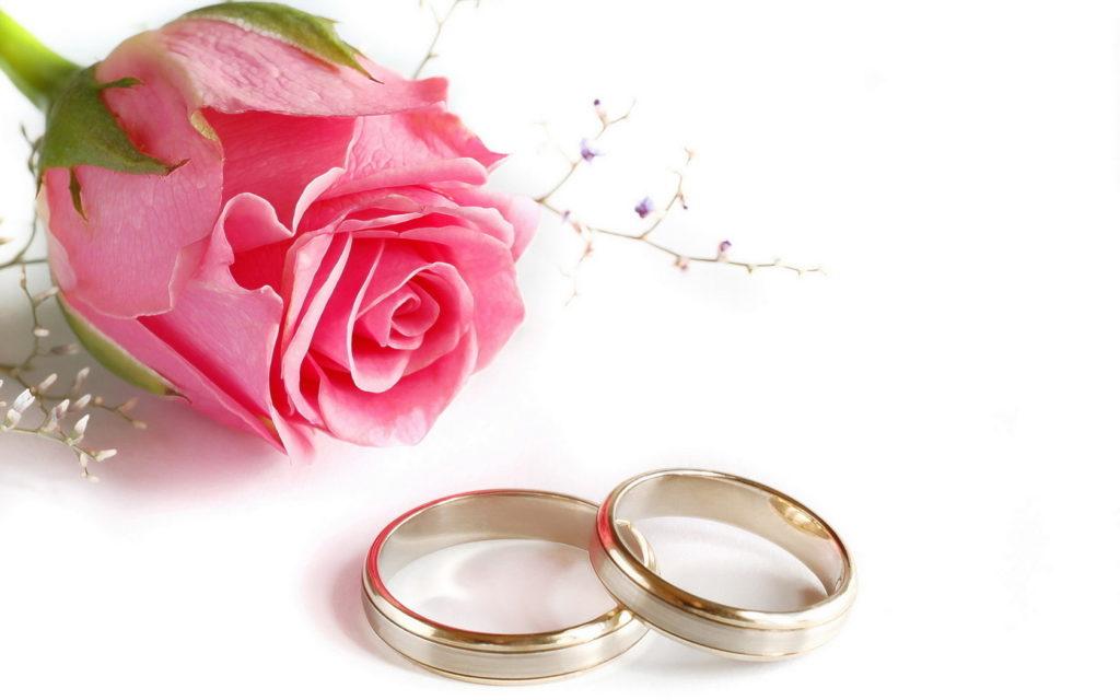 Свадебные кольца рядом с розой