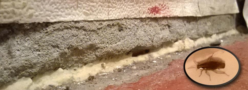 Щель с стене и таракан, обведённый в кружочек