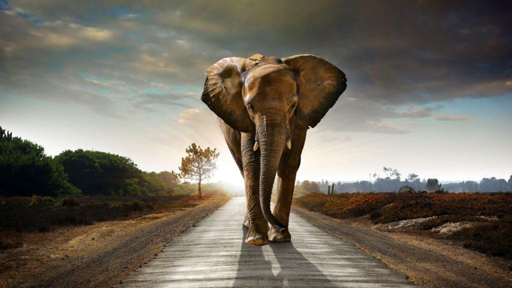 Слон идёт по дороге