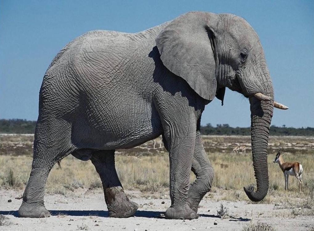 К чему снится женщине слон: сонник