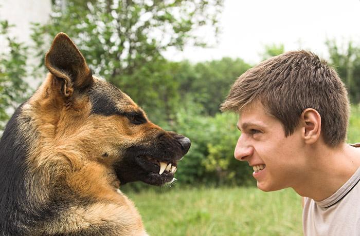 Собака рычит на парня