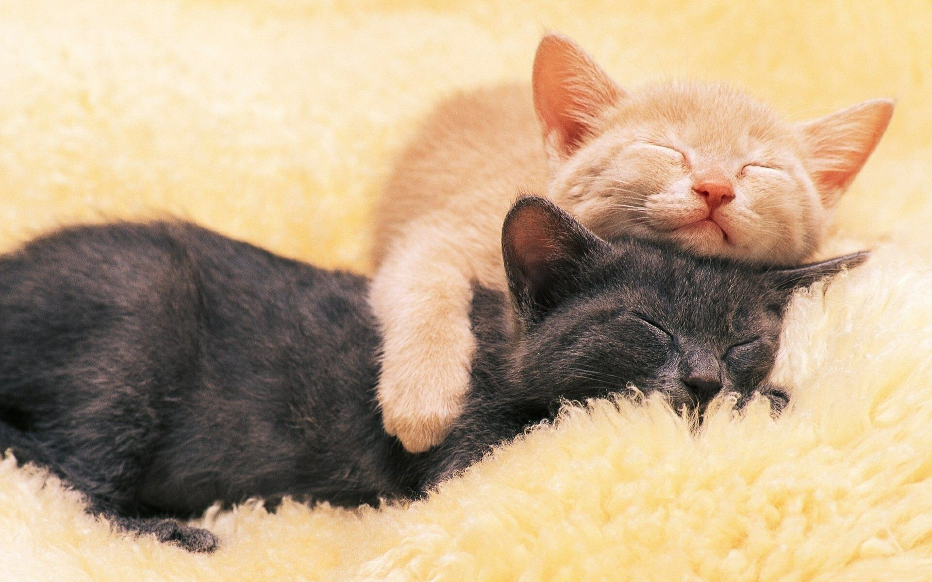 котята спят в обнимку фото будем брать старые
