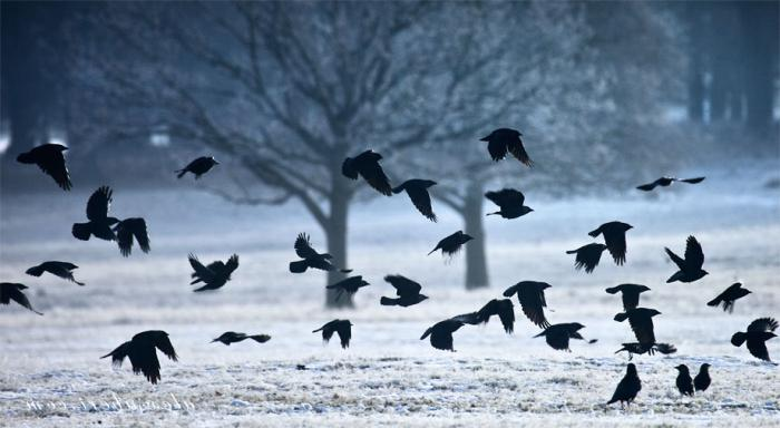 тексты песен, к чему снятся стая птиц залетевшая домой выживали