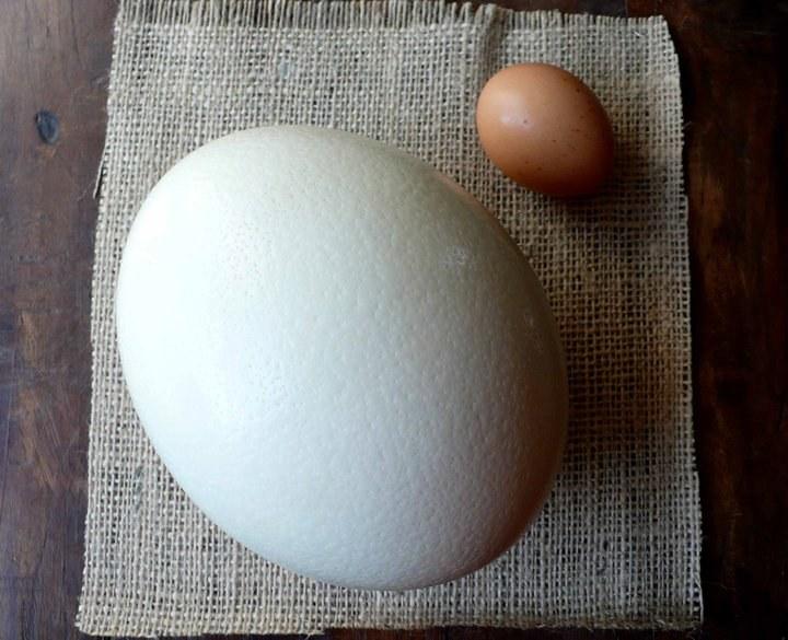 Страусиное и куриное яйца
