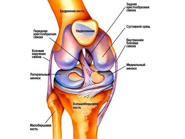 Связки колена, схема