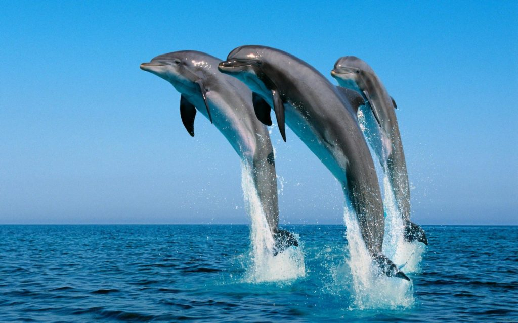 Три дельфина в море