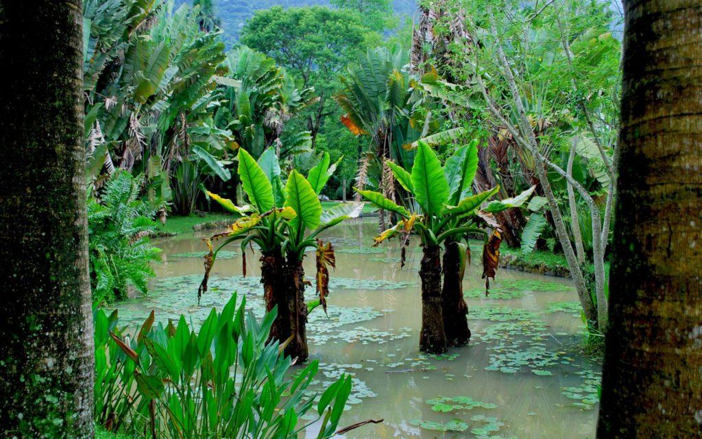 Тропическое болото