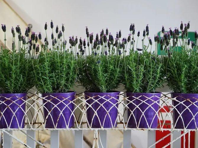 принципы подкормки комнатных растений