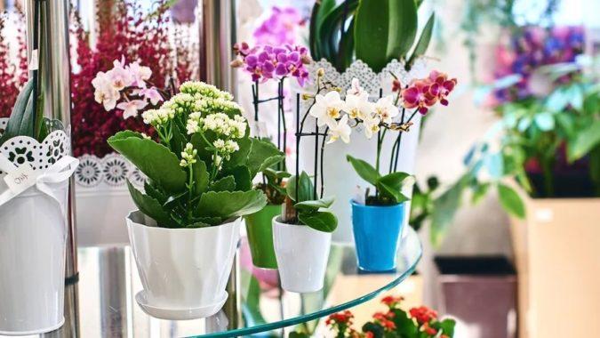 удобрения растений в горшках