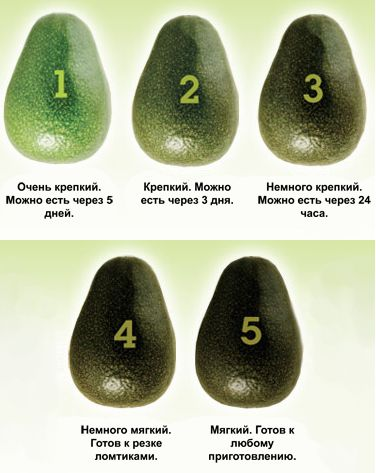 Внешний вид авокадо разной степени зрелости