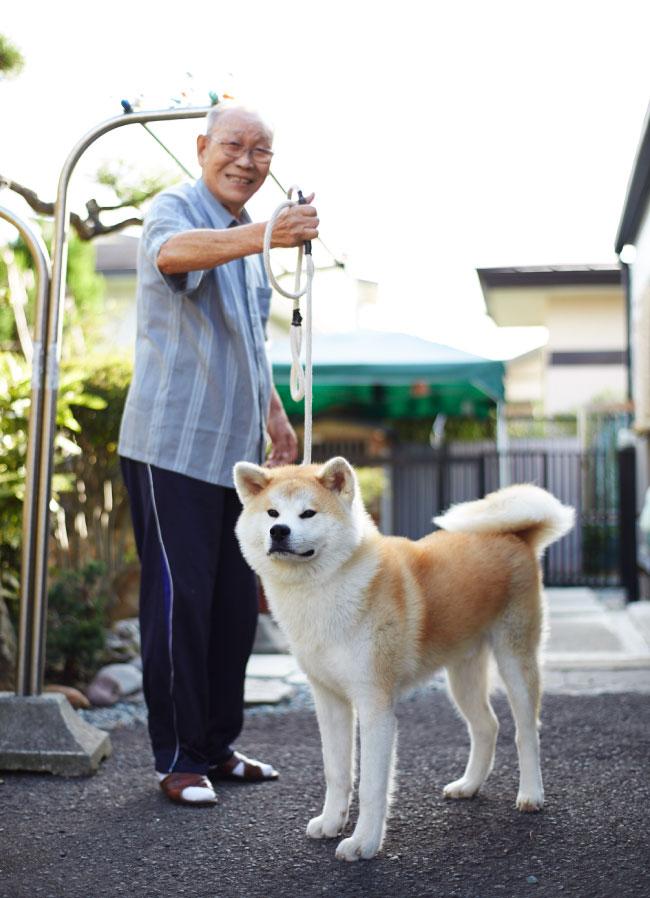 Японец и акита-ину