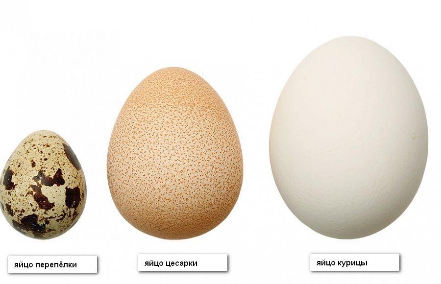 <br />Яйца разных птиц» width=»900″ height=»580″ /></a> Яйца разных птиц могут отличатся не только размером, но и составом[/caption]</div> <p style=