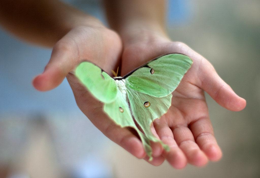 Зелёная бабочка