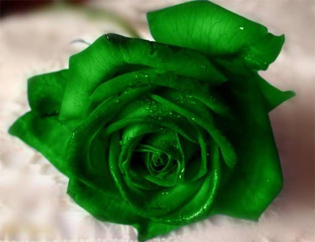 Зеленоватые выделения при беременности